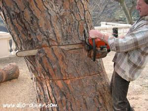 comment abattre un arbre tronc petit et gros diam tre. Black Bedroom Furniture Sets. Home Design Ideas