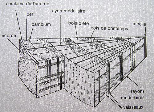 la coupe d 39 un arbre c 39 est comment page 2 4. Black Bedroom Furniture Sets. Home Design Ideas